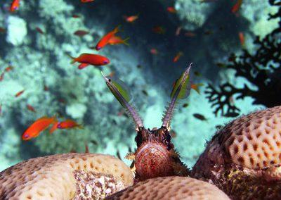 curiosity kills the fish